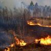 丛林大火会影响房地产市场吗